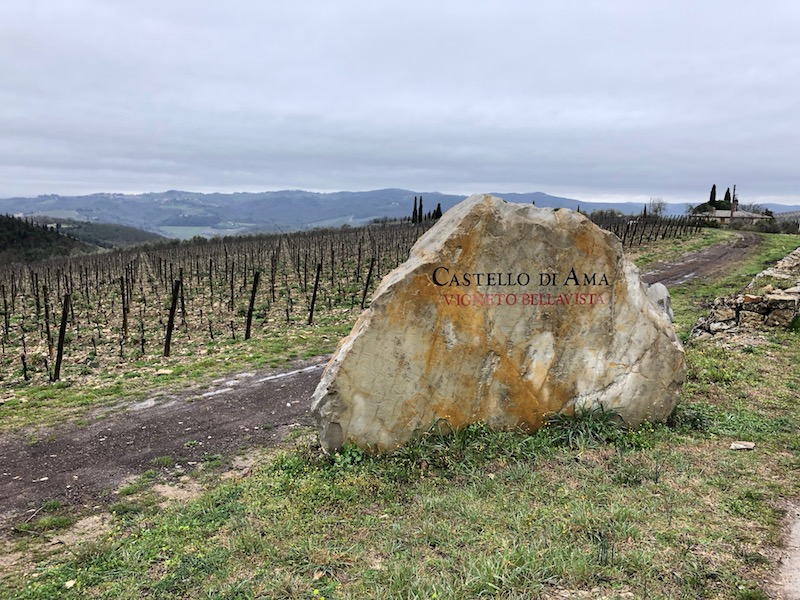 Bellavista vineyard